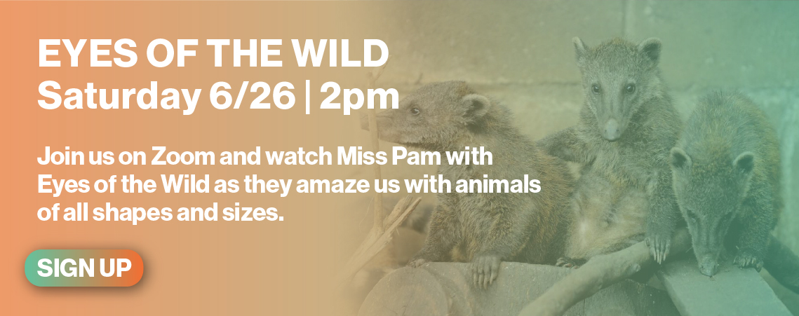 Eyes of the Wild 6/26 2pm